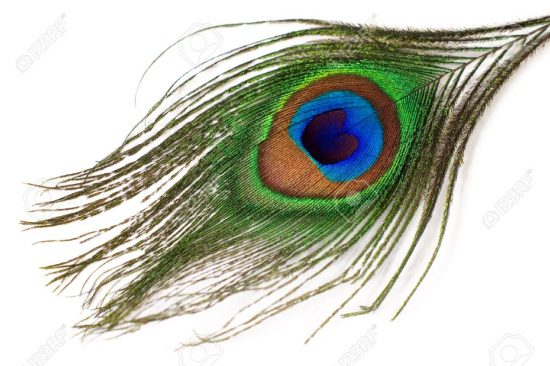 15131555-peacock-feather-isolated-on-a-white-background-Stock-Photo